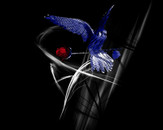rose brushed red living in a black and blue bird by Talin