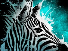 Zebra T-Shirt Design by