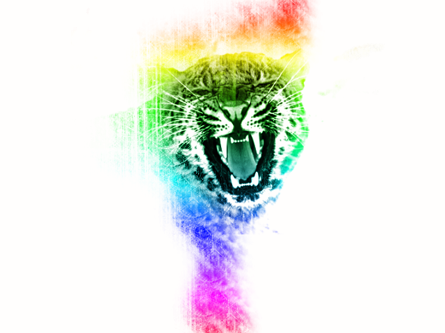Cheetah Rainbow