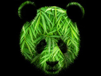 Green Panda T-Shirt Design by