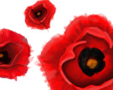Poppy Print by ScarlettVeith