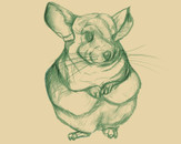 Chinchilla by so17ccer