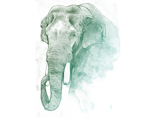 elephant - for lack of a better name
