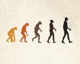 Human Evolution by makatha