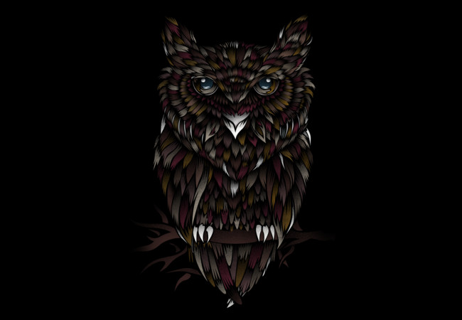 WILD OWL  Artwork