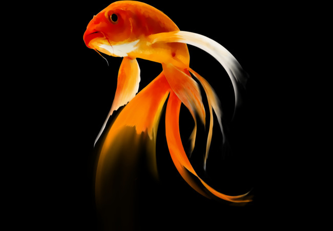 KOI  Artwork