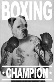 Boxer Boxing Champion