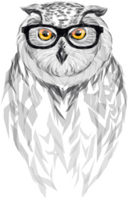 Inquisitive Owl