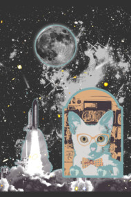 cats go to the moon