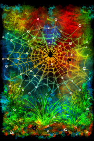 Colorful world of spiders
