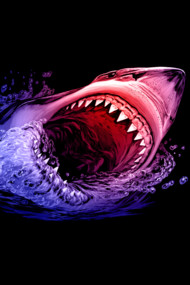 Great White Shark  3
